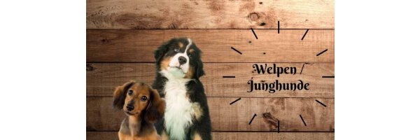 Welpen/Junghunde